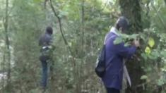 Fibromialgia y bosques
