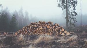 5 mitos sobre la sostenibilidad que te conviene derribar