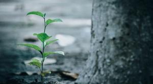 Por qué plantar un árbol puede frenar el cambio climático