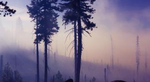 Miles de incendios para alimentar el cambio climático