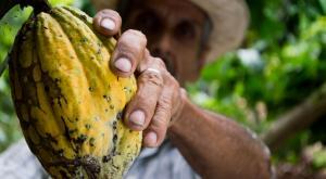 Chocolate y deforestación: el oscuro secreto tras el cacao