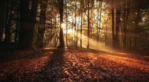 ¿Cómo serán los otoños en 2050? Estas podrían ser las temperaturas más altas y lluvias previstas
