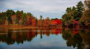 Las hojas de los árboles están retrasando su cambio de color en otoño por el cambio climático