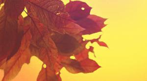 2020: el noviembre y el otoño más cálidos desde que hay registros