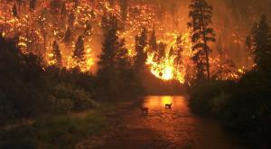 2020, el año de los incendios de récord