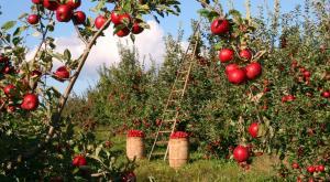 Así lidera España la agricultura ecológica en Europa